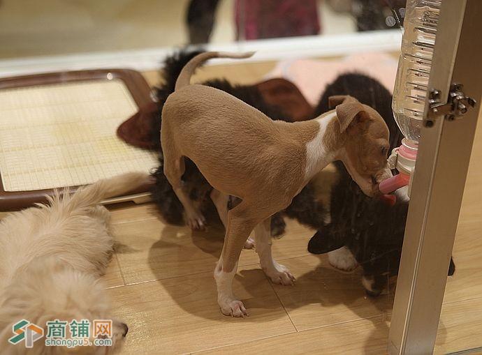 求租福田区50-100㎡宠物店